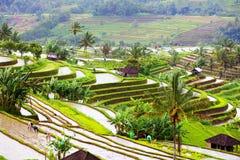 Terraços do arroz de Bali Campos do arroz de Jatiluwih fotografia de stock royalty free