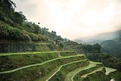 Terraços do arroz de Banawe Fotografia de Stock