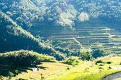 Terraços do arroz de Batad, Banaue, Ifugao, Filipinas fotos de stock