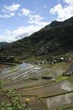 Terraços do arroz de Ifugao fotografia de stock