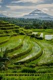 Terraços do arroz de Jatiluwih Fotos de Stock Royalty Free