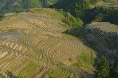 Terraços do arroz de Longji, província de Guangxi, China Imagem de Stock Royalty Free