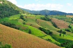 Terraços do arroz de montanha e campos do milho. Fotos de Stock Royalty Free