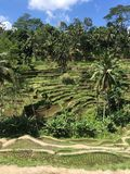 Terraços do arroz de Tegallalang em Ubud Bali Imagens de Stock Royalty Free