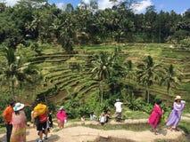 Terraços do arroz de Tegallalang em Ubud Bali Imagem de Stock