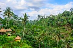 Terraços do arroz de Tegallalang, Ubud, Bali, Indonésia fotografia de stock