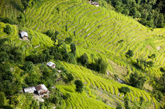 Terraços do arroz do ofl da vista aérea fotografia de stock