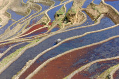 Terraços do arroz do yuanyang foto de stock royalty free