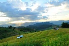 Terraços do arroz e sol da noite. Foto de Stock Royalty Free