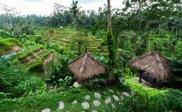 Terraços do arroz em bali fotografia de stock