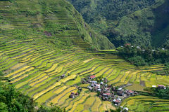 Terraços do arroz em Batad Foto de Stock Royalty Free