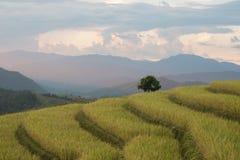 Terraços do arroz em Tailândia do norte Imagens de Stock