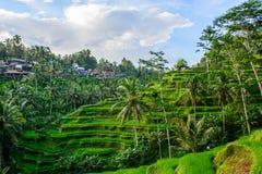 Terraços do arroz em Tegallalang, Ubud, Bali, Indonésia foto de stock royalty free