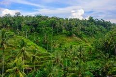 Terraços do arroz em Ubud, Bali, Indonésia imagens de stock
