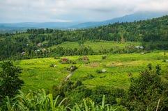 Terraços do arroz no Bali A vila está em um vale entre os terraços do arroz Cultivo no norte do Bali, Indonesi do arroz Imagem de Stock Royalty Free