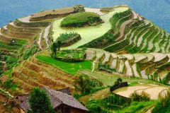 Terraços do arroz no cume do dragão, nivelando a luz Imagens de Stock