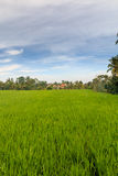 Terraços do arroz perto de Ubud Fotos de Stock Royalty Free