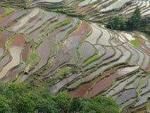 Terraços do campo do arroz em Yunnan, China fotografia de stock royalty free