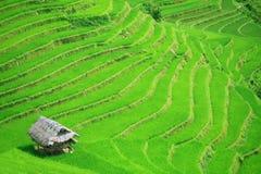 Terraços do campo do arroz imagem de stock royalty free