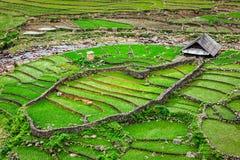 Terraços do campo do arroz Fotografia de Stock