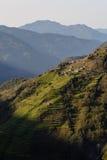 Terraços do trigo de inverno Imagem de Stock