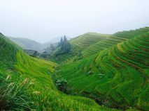 Terraços dos arrozes de Pingnan Fotografia de Stock Royalty Free