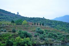 Terraços dos vinhedos e de uma casa de campo foto de stock royalty free