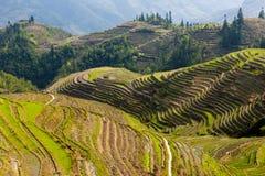 Terraços em Longsheng, China do arroz Fotos de Stock Royalty Free