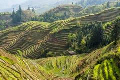 Terraços em Longsheng, China do arroz Imagens de Stock Royalty Free