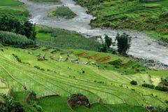 Terraços Sapa do arroz Imagens de Stock Royalty Free
