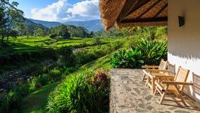 Terraços verdes bonitos do arroz vistos de uma cabine do recurso fotos de stock royalty free