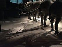 Terra - ратники cotta стоковое фото rf