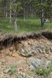 Terra abaixo da floresta Imagem de Stock