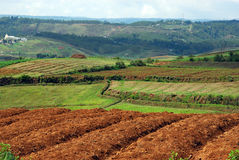 Terra agrícola indiana imagens de stock royalty free