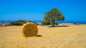 Terra agricola dell'azienda agricola, Cipro Fotografia Stock