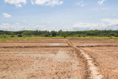 Terra antes de plantar Foto de Stock