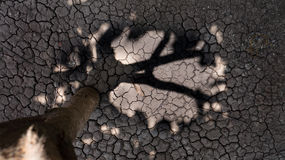 A terra asciughi Fotografia Stock Libera da Diritti