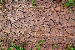 Terra asciutta con le crepe, vista superiore del campo di grano Fotografia Stock Libera da Diritti