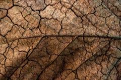 Terra asciutta della foglia Fotografia Stock
