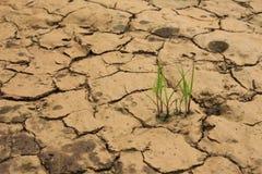 Terra asciutta di siccità della pianta di deserto Fotografia Stock