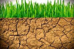 Terra asciutta ed erba verde Fotografia Stock Libera da Diritti