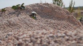 Terra asciutta rocciosa nel deserto Le piccole piante sono visibili Deserto di Judean video d archivio