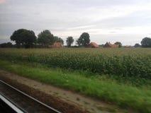 Terra Belgio del cereale Fotografia Stock