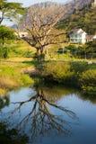 Terra bonita Fotografia de Stock