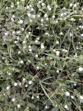 terra branca e verde da flor pequena fotos de stock royalty free