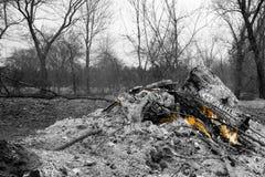 Terra cancelada ajustando o fogo à escova imagem de stock royalty free