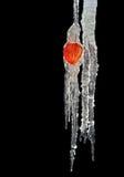 Terra-cereja Frost-bound Foto de Stock Royalty Free