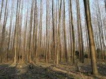 Terra che è coperta di foglie cadute nel giorno soleggiato Fotografia Stock Libera da Diritti