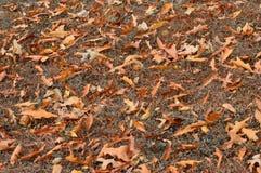 Terra coberta com as folhas caídas Foto de Stock Royalty Free