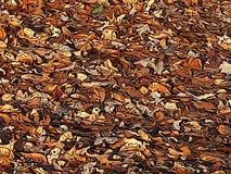 Terra coberta com as folhas de outono fotos de stock